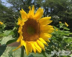 松本デリヘルPrecede(プリシード) つゆき(49)の8月5日写メブログ「『休日の楽しみ』」