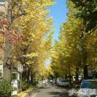 松本デリヘルPrecede(プリシード) つゆき(49)の10月15日写メブログ「『お人柄』」
