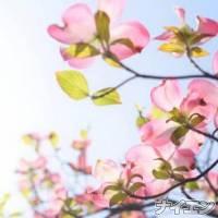 松本デリヘルPrecede(プリシード) かえで(24)の8月21日写メブログ「本日」