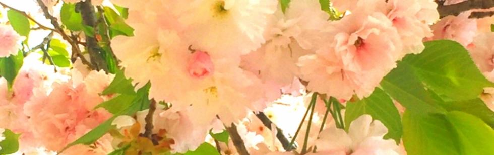 松本デリヘルPrecede(プリシード) さや(27)のブログカバー画像