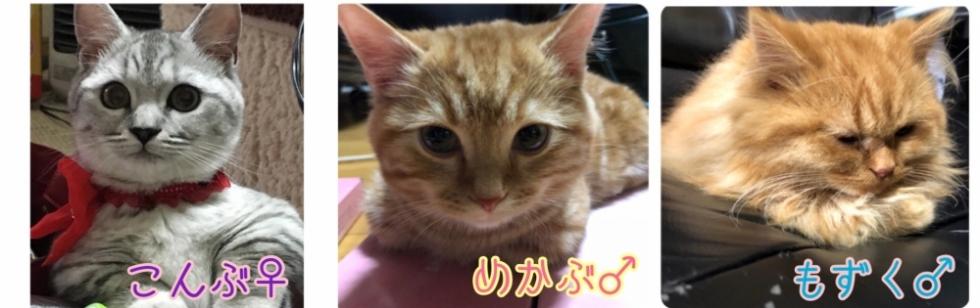 新潟手コキCECIL新潟店(セシルニイガタテン) 双子はむ(18)のブログカバー画像