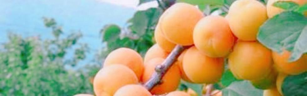 長岡デリヘルInfinity(インフィニティ) 杏樹(24)のブログカバー画像