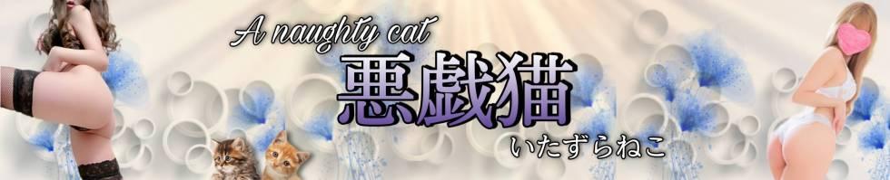 A naughty cat 悪戯猫(イタズラネコ) 新潟市/デリヘル