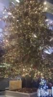 古町ガールズバーchou chou(シュシュ) なぎの12月11日写メブログ「今年もやってくる〜」