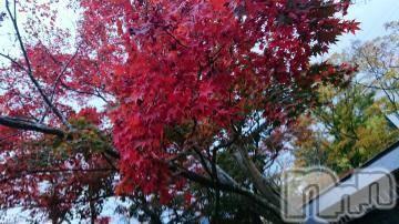 長岡人妻デリヘルmamaCELEB(ママセレブ) 【新人】奈々(24)の11月22日写メブログ「紅葉!」