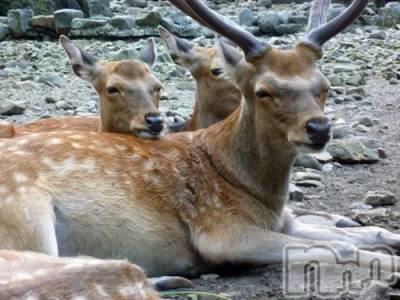 松本デリヘル VANILLA(バニラ) じゅり(20)の4月8日写メブログ「鹿さんありがとうね・・」