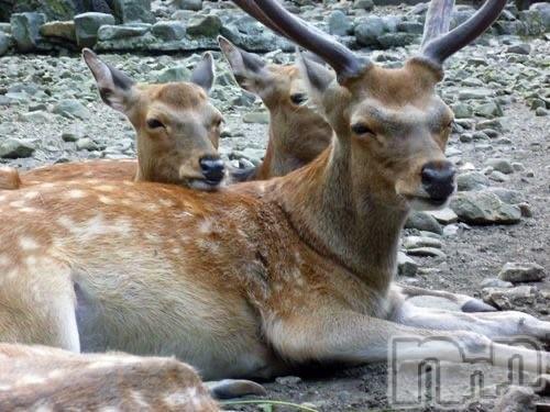 松本デリヘルVANILLA(バニラ) じゅり(18)の2021年4月8日写メブログ「鹿さんありがとうね・・」