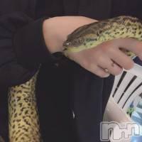 新潟駅前居酒屋・バーカラオケフードバー Mimi(カラオケフードバー ミミ) ぽかりん(20)の12月11日写メブログ「爬虫類」