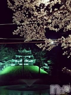 上越人妻デリヘル 愛妻(ラブツマ) 空井けい★濃厚舐め(31)の4月3日写メブログ「桜がすごく綺麗です!」