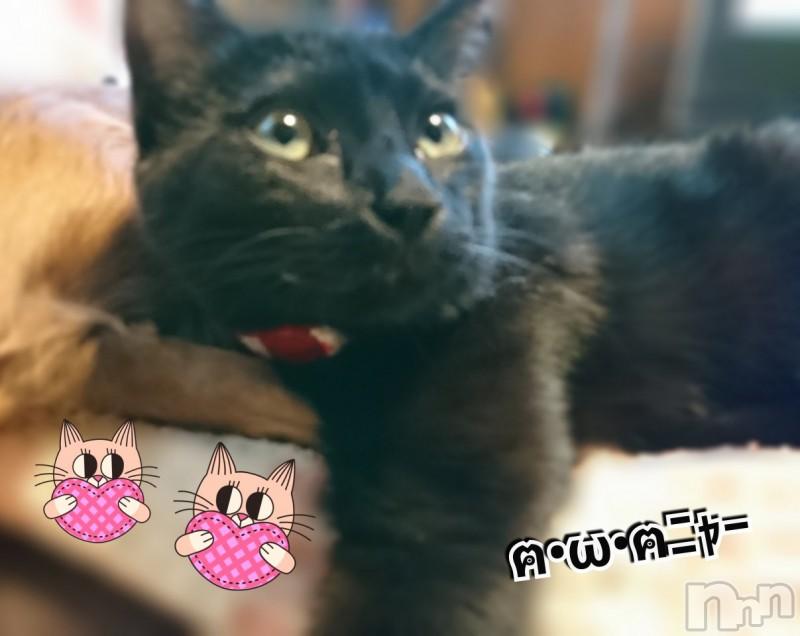 伊那デリヘルピーチガール かんな(23)の2019年3月15日写メブログ「夜中の」