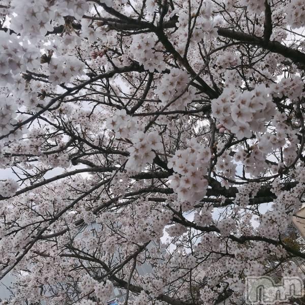 松本駅前キャバクラclub Eight(クラブ エイト) ゆいの4月17日写メブログ「きれいー!」