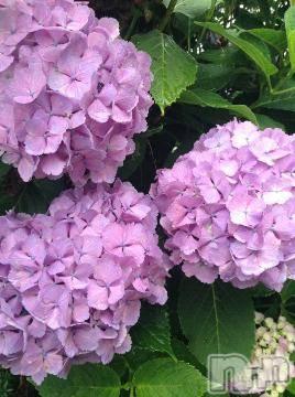 松本デリヘルPrecede 本店(プリシード ホンテン) えりか(52)の7月4日写メブログ「雨、上がった?」