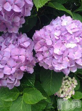 松本デリヘルPrecede 本店(プリシード ホンテン) えりか(52)の7月23日写メブログ「今日は12時から……。」
