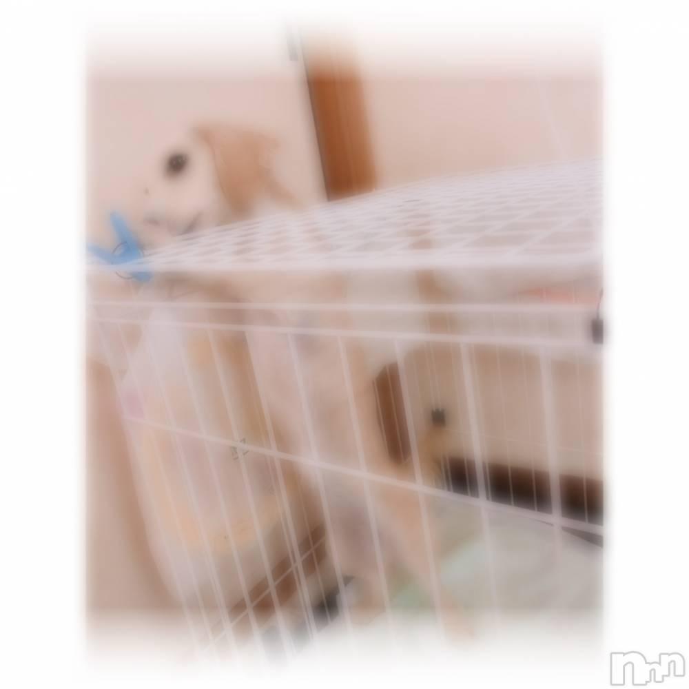 上田デリヘル2ndcall ~セカンドコール~(セカンドコール) るみ☆ロリ天使(18)の5月20日写メブログ「新しい家族♡♡♡」