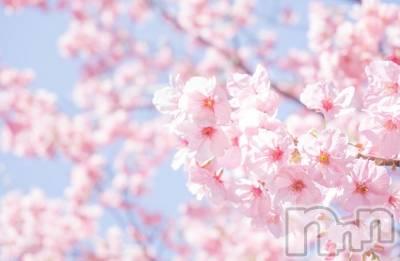 松本ぽっちゃり ぽっちゃり 癒し姫(ポッチャリ イヤシヒメ) 美尻☆しずか姫(36)の4月9日写メブログ「桜は…?」