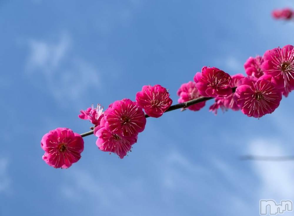 飯田デリヘルFive 飯田店(ファイブイイダテン) マリ(28)の3月1日写メブログ「おはようございますです。」
