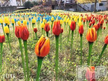 松本メンズエステプレミアムヘブン はるな(26)の11月16日写メブログ「お花畑!」