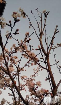 長岡人妻デリヘル 長岡人妻市(ナガオカヒトヅマイチ) つばき(34)の4月1日写メブログ「新年度スタート」