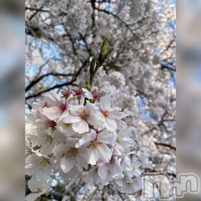 松本デリヘル VANILLA(バニラ) るりか(20)の4月1日写メブログ「いい天気😘」