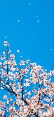 松本人妻デリヘル 恋する人妻 松本店(コイスルヒトヅマ マツモトテン) のどか☆癒し系(37)の4月4日写メブログ「おはようございます☆」