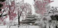 権堂キャバクラ151-A(イチゴイチエ) まどか(23)の3月29日写メブログ「桜雪」