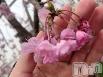 新潟デリヘルMax Beauty 新潟(マックスビューティーニイガタ) ねこ☆超極上美女(28)の4月2日写メブログ「あなたに振り返る(4/2 36.2度)」