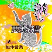 新潟デリヘル A naughty cat 悪戯猫(イタズラネコ)の1月2日お店速報「1月2日 12時31分のお店速報」