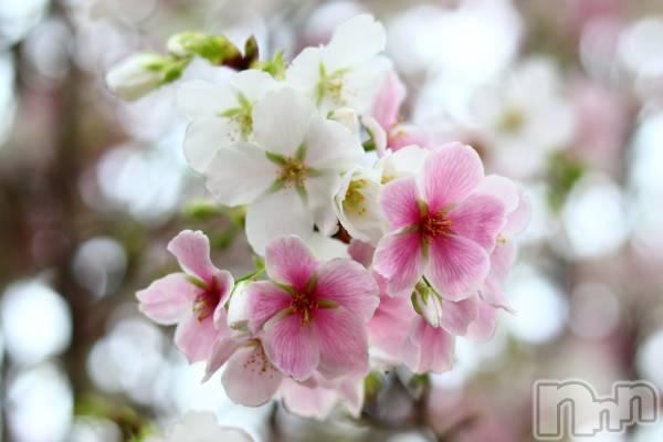 新潟発コンパニオンクラブ新潟コンパ(ニイガタコンパ) ゆりの3月14日写メブログ「春を探しに💕☺️」