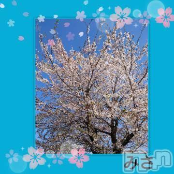松本ぽっちゃり 長野ちゃんこ 松本塩尻店(ナガノチャンコ マツモトシオジリテン) みさ(45)の4月9日写メブログ「桜」