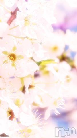 松本人妻デリヘル松本人妻隊(マツモトヒトヅマタイ) めい(47)の2021年4月2日写メブログ「桜が綺麗で。」