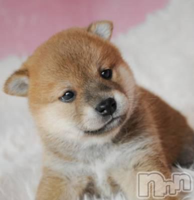 上越デリヘル Charm(チャーム) かな☆(45)の9月12日写メブログ「[お題]from:ブルペンエースさん」