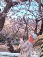 新潟駅前居酒屋・バーレトロ広場 わいわい(レトロヒロバ ワイワイ) ゆず(22)の4月20日写メブログ「SAKURA🌸👋」