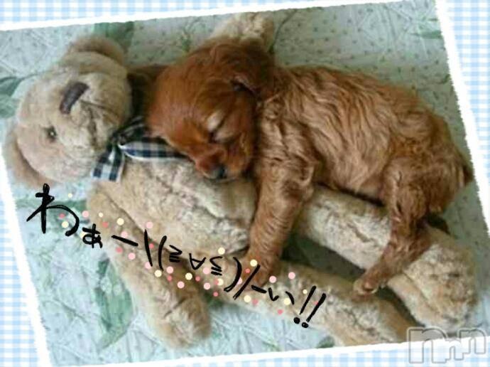 松本人妻デリヘル恋する人妻 松本店(コイスルヒトヅマ マツモトテン) なるみ☆綺麗系(37)の1月13日写メブログ「おはようございます」