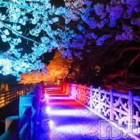 上越デリヘル ヘヴンの4月7日お店速報「★ 夜桜を見ながら女の子と・・・ ★」