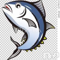 三条デリヘル まぐろさんいらっしゃ~い(マグロサンイラッシャ~イ)の11月8日お店速報「本日の漁師が出港してますよ~」