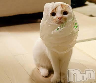 松本デリヘルPrecede(プリシード) みおん(36)の8月12日写メブログ「袋好きです冷たくて」