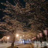 上越メンズエステ 上越風俗出張アロママッサージ(ジョウエツフウゾクシュッチョウアロママッサージ)の3月30日お店速報「夜桜も『上越アロマ ツイッター』で検索してね」