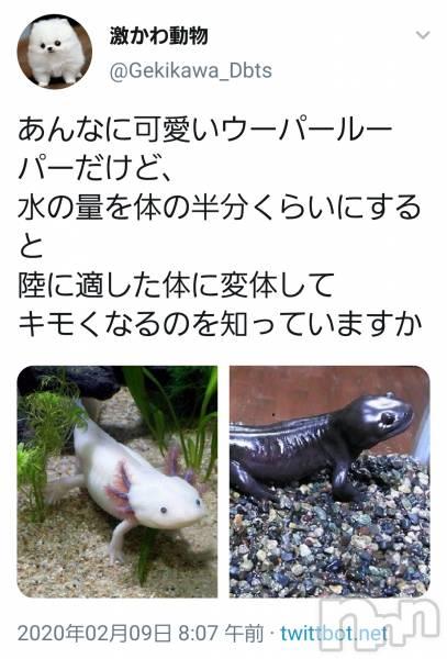 権堂キャバクラCLUB S NAGANO(クラブ エス ナガノ) の2020年2月15日写メブログ「2月15日 19時45分の写メブログ」