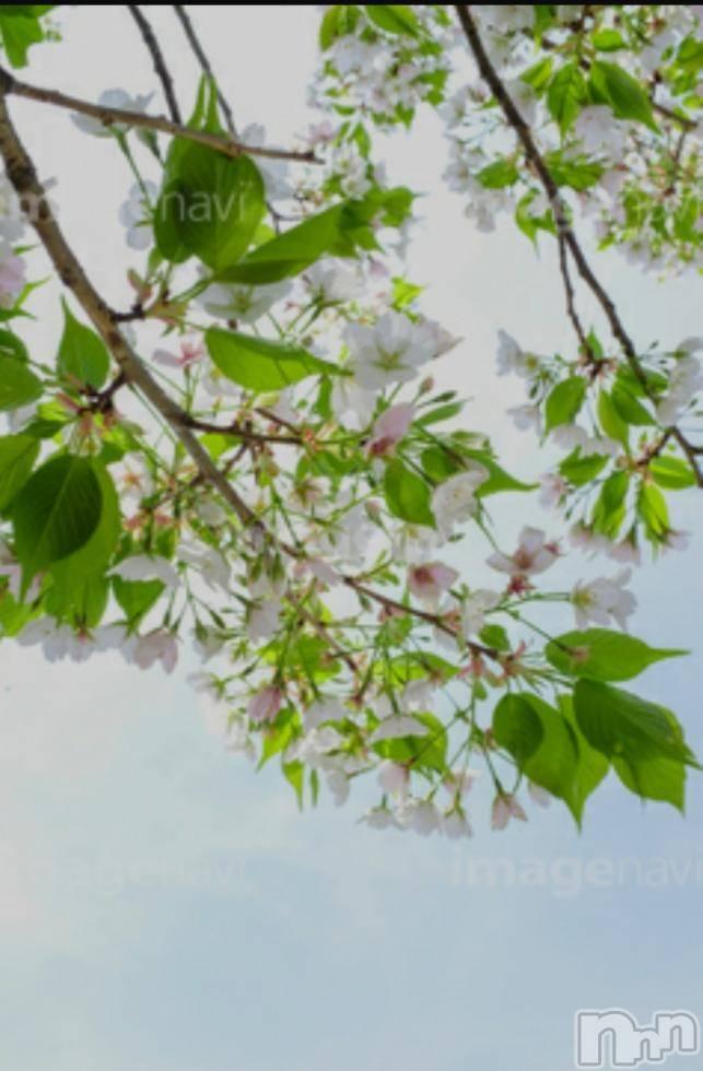 新潟メンズエステ新潟風俗出張アロママッサージ(ニイガタフウゾクシュッチョウアロママッサージ) 完熟しずな☆様(46)の4月26日写メブログ「葉桜の季節に君を想うということ」