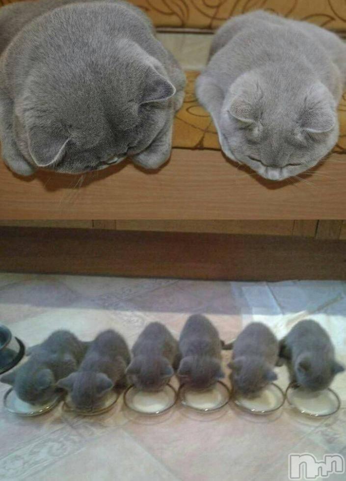 松本デリヘルPrecede(プリシード) あやの(42)の10月26日写メブログ「癒される猫ちゃん」