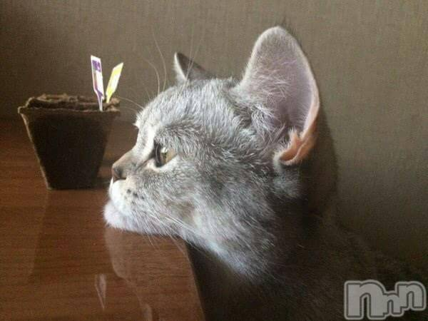 松本デリヘルPrecede(プリシード) あやの(42)の4月21日写メブログ「こんにちはヽ(*´∀`)ノ」