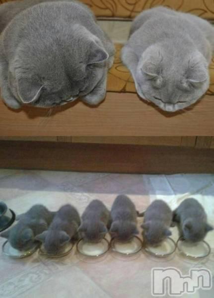 松本デリヘルPrecede(プリシード) あやの(41)の10月26日写メブログ「癒される猫ちゃん」