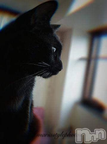 松本デリヘルPrecede(プリシード) まりあ(43)の3月20日写メブログ「[お題]from:ニャンコ1さん」