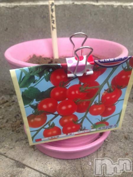 新潟駅前メンズエステoneness(ワンネス) 鈴木 もえの4月10日写メブログ「プチトマトミニトマト」