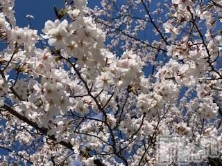 袋町キャバクラクラブ プラチナ 上田(クラブ プラチナ ウエダ) 樹みさの4月15日写メブログ「。」