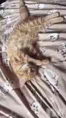 殿町リラクゼーション oneness 愛染家の奥様マッサージ(ワンネス アイゾメケノオクサママッサージ) 愛染 つぼみの6月12日動画「ほっこり癒しの時間を(*´꒳`*)…ワンネス♪」