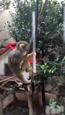 賢いりす猿
