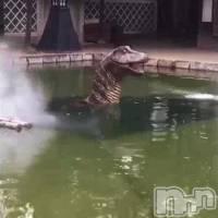 出た!恐竜ーーー