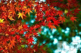 新潟メンズエステParisie-パリジェ-(パリジェ) ゆずき上越人気妻(34)の2018年10月14日写メブログ「ありがとうございました♡」