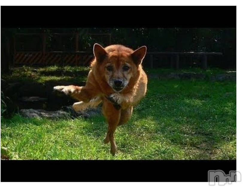 新潟デリヘル至れり尽くせり(イタレリツクセリ) しの(32)の2月18日写メブログ「犬という最大級の癒し」